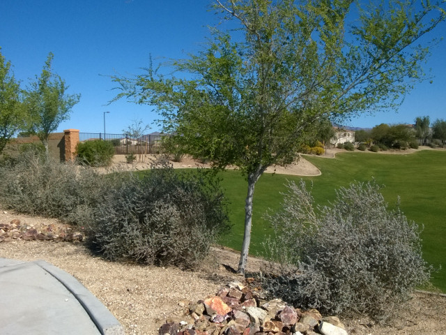 Commercial landscaper phoenix az abc scapes inc for Commercial landscaping services