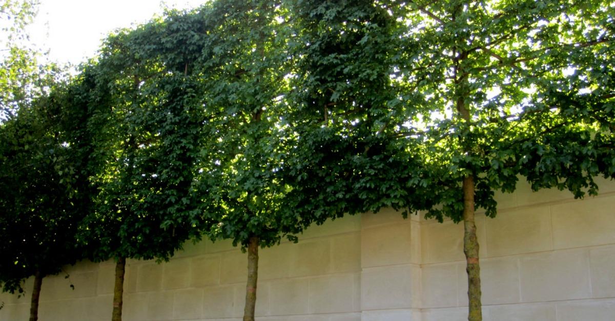 Add privacy to a backyard landscape abc scapes inc for How to add privacy to backyard