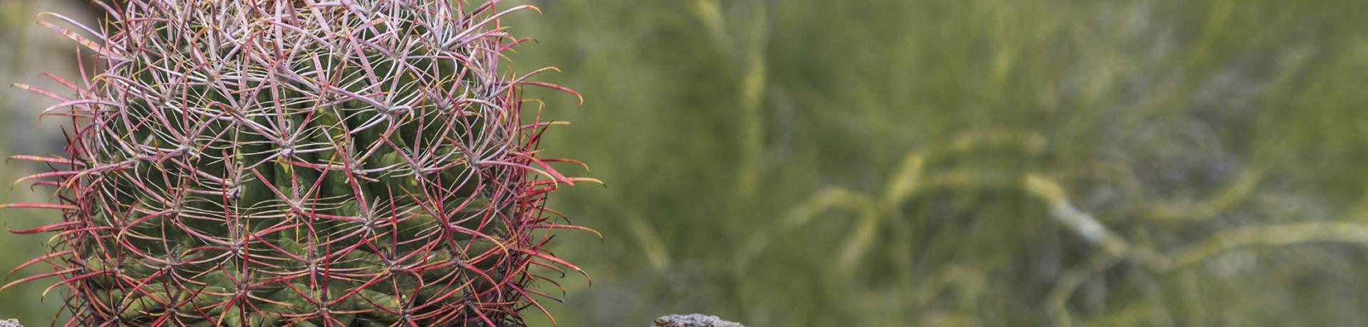 slide-cactus-wide
