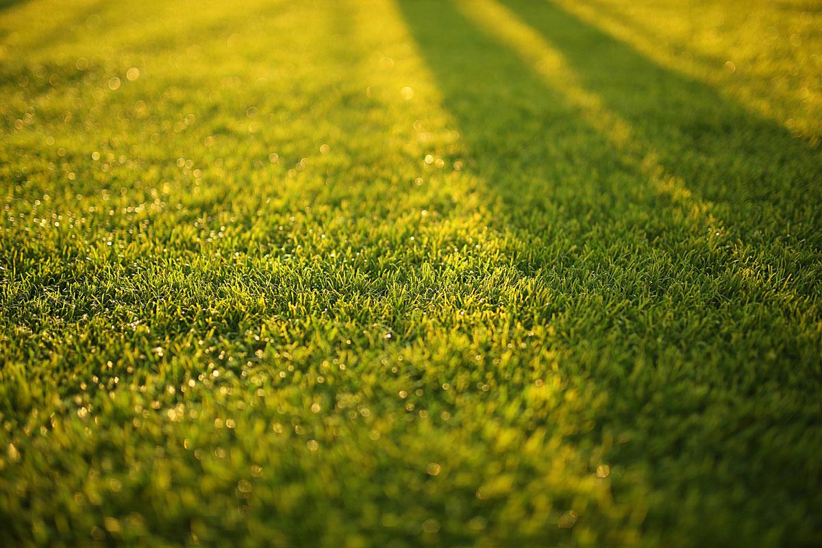 Aeration Grass