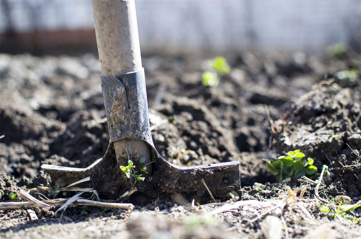 Assess Your Soil