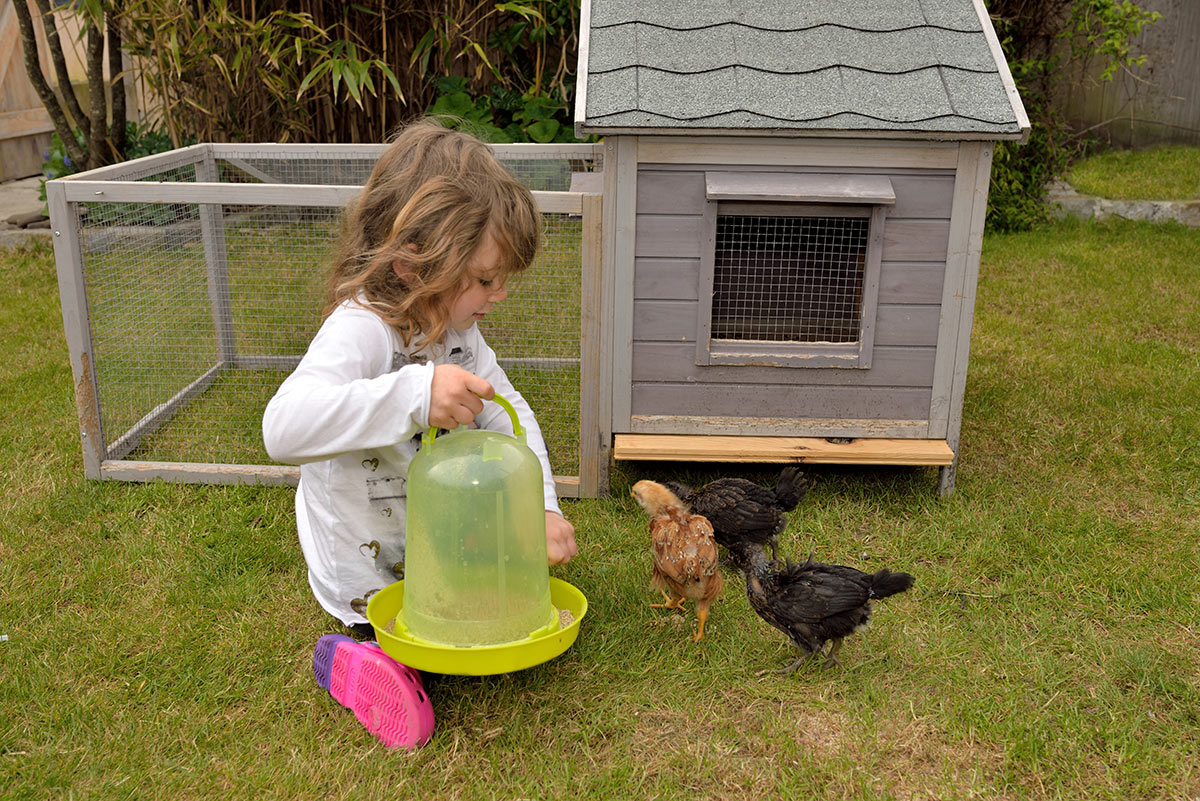 Backyard Design Ideas Girl Chickens