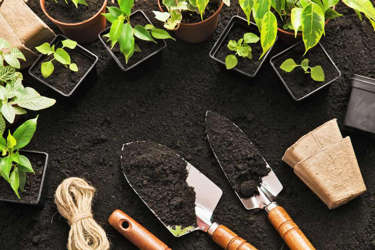 Encourage Growth Of Plants