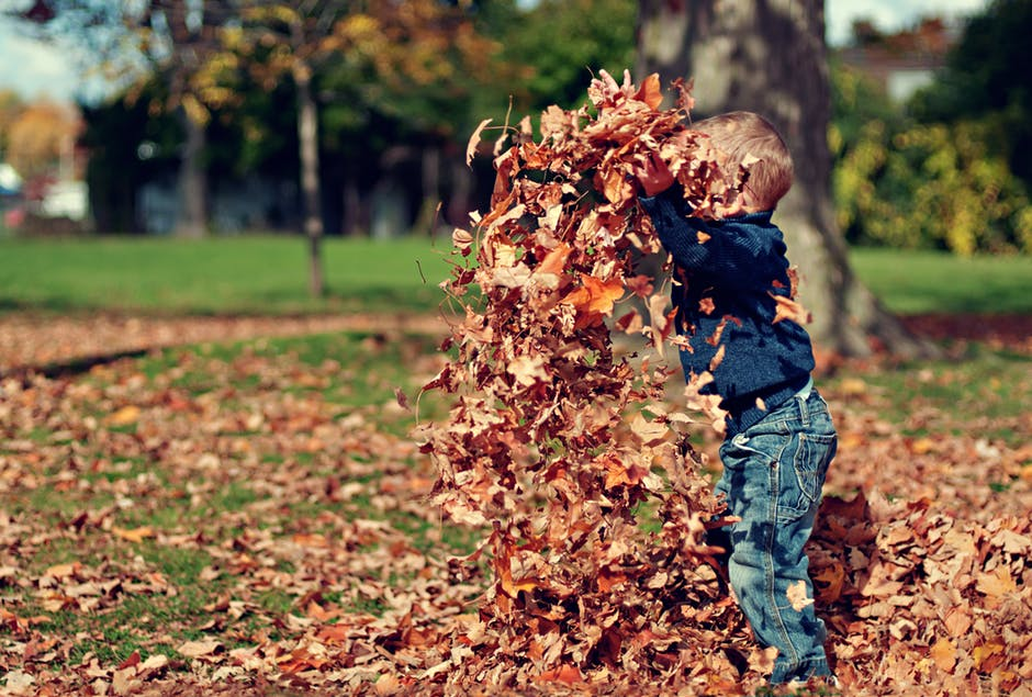 Fall Yard Clean Up Leaves Boy