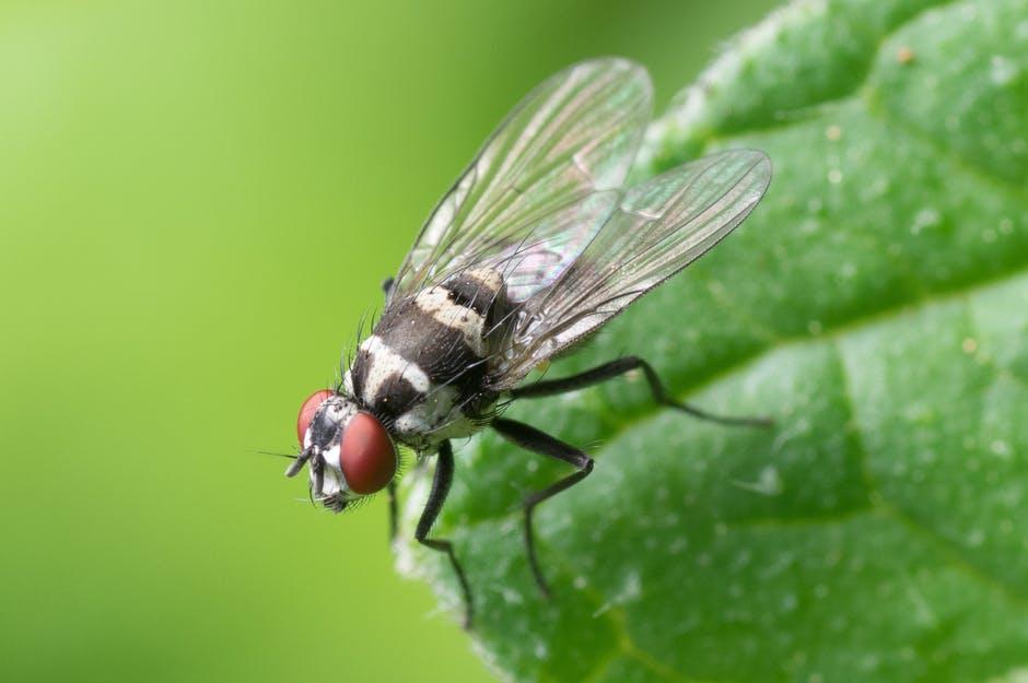 Bugs Flies Green Leaf