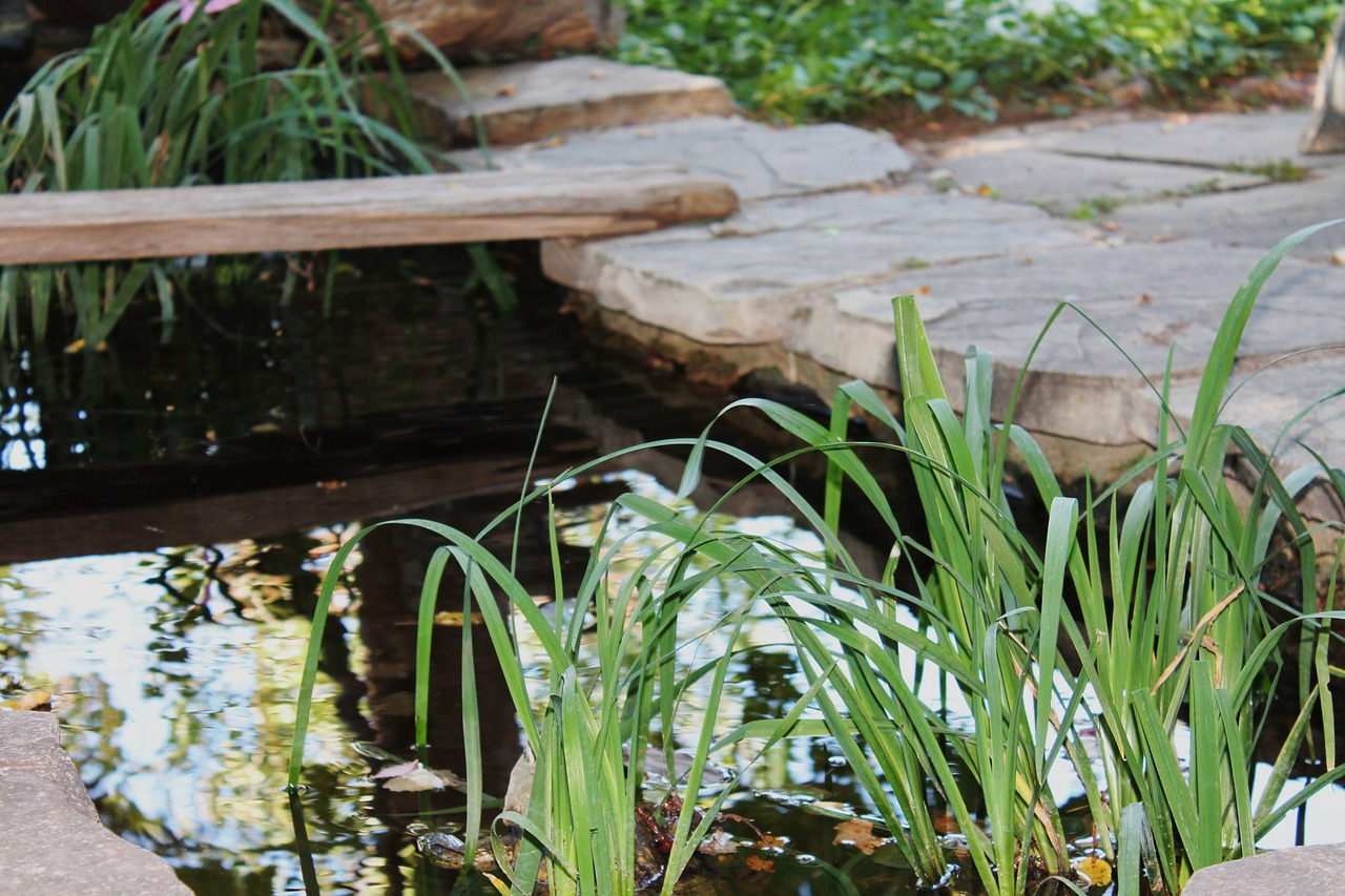 Pond Can Boost Your Backyard
