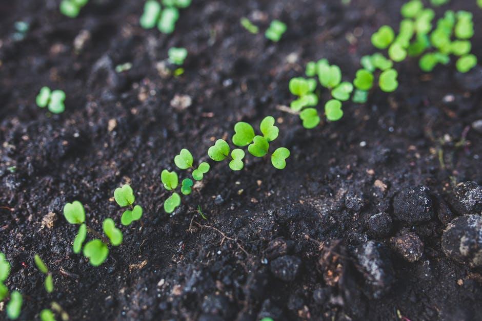 Garden Soil Topsoil Clovers