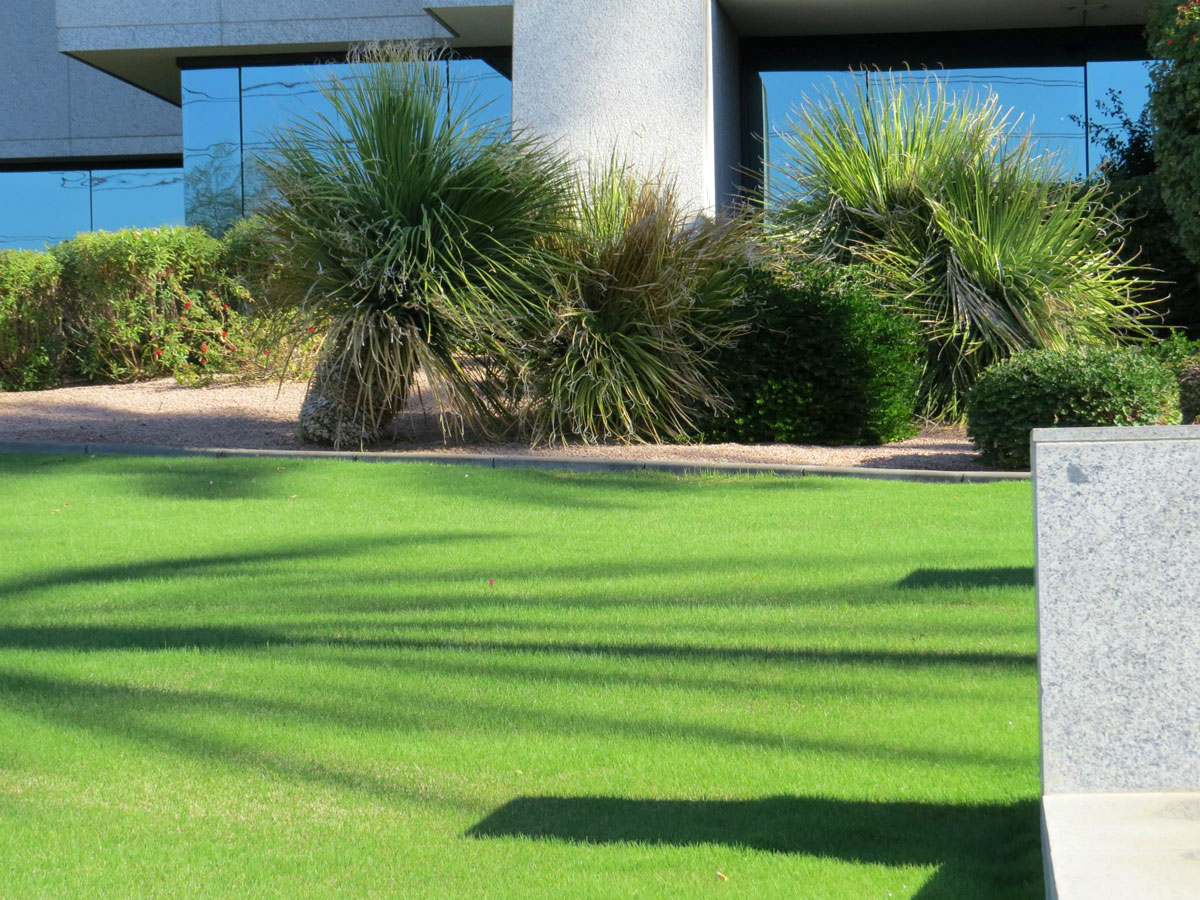The Pros of Green Spaces Grass Shrubs