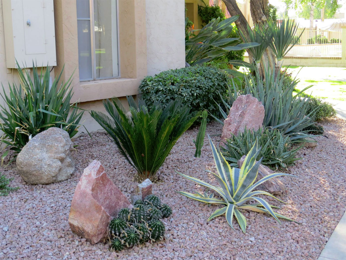Hard Landscape Design Bushes Rocks