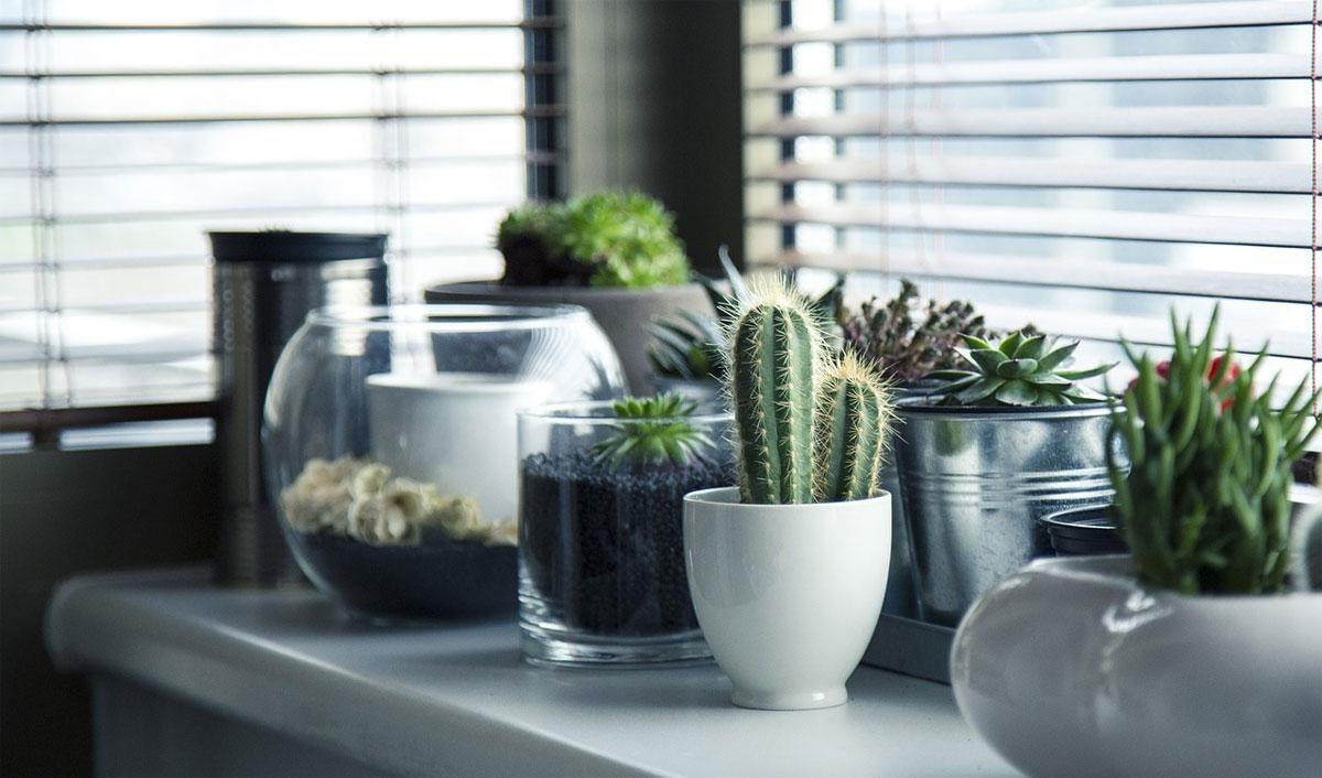 Low Maintenance Plants Cactus