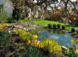 Pros and Cons of a Backyard Pond