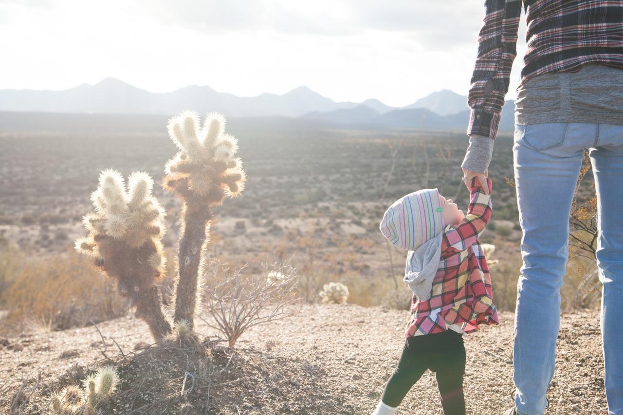 Hiring A Landscaper Cactus Baby
