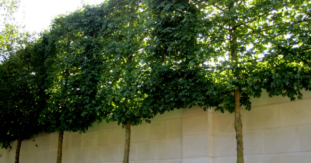 Privacy Backyard Trees Wall