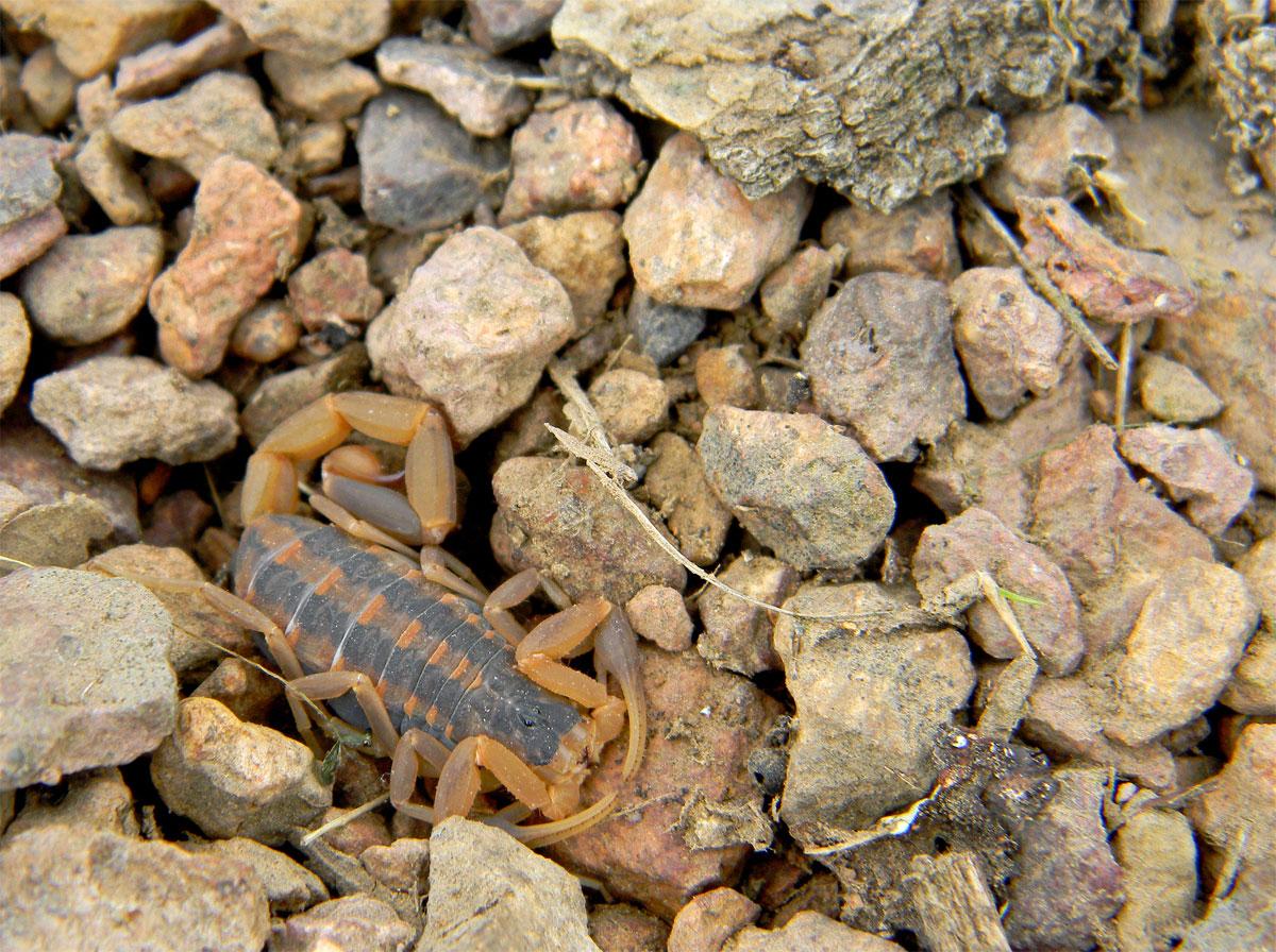 Scorpions Rocks