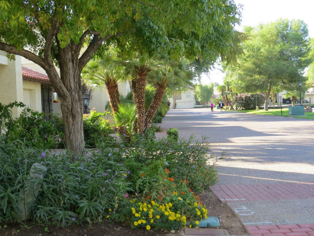 True or False Trees Street