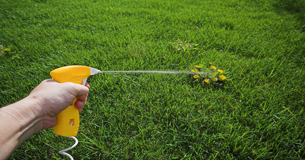 Weed Control Services Spray