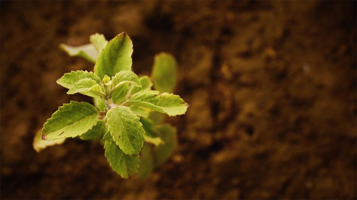 What Is In Fertilizer