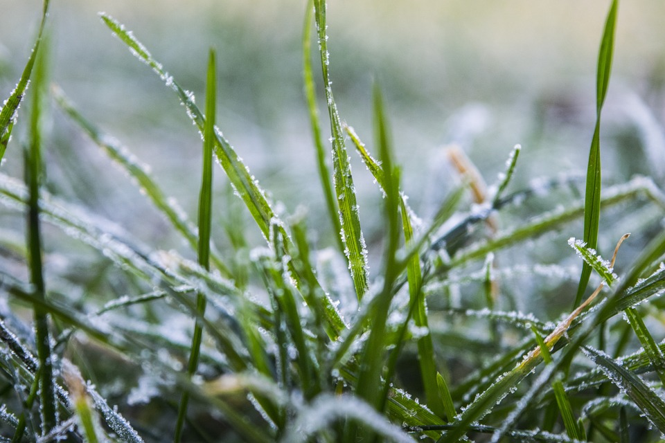 Winter Lawn Grass Frozen